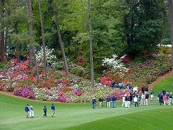 A blooming Augusta National is home to the Masters every year, making it a unique handicap for sports bettors.