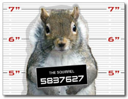 Have you seen this squirrel?